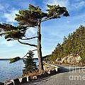 Somes Sound Maine by John Greim
