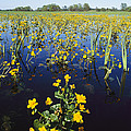 Spring Flood Plains With Wildflowers by Norbert Rosing