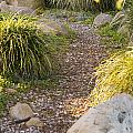 Stone Path Through Garden by James Forte
