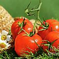 Summer Tomatoes by Sandra Cunningham