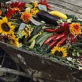 Sunflowers, Dahlias, Eggplants, Pepper by Jonathan Blair