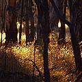 Sunset Falls Over Seeding Grasses by Jason Edwards