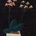 Table Orchid by M Valeriano