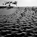The Dunes At Dusk by Tara Turner