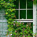 The Other Window by Lisa  DiFruscio
