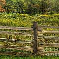 The Split Rail Meadow by Benanne Stiens