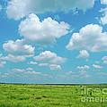 Under The Texas Sky by Lizi Beard-Ward