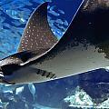 Underwater Flight by DigiArt Diaries by Vicky B Fuller