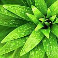 Wet Foliage by Carlos Caetano