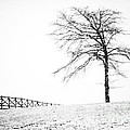 Winter In Black And White by David Waldrop