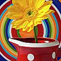 Yellow Daisy In Red Pitcher by Garry Gay