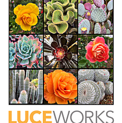 Marcia Luce at Luceworks - Fine Artist