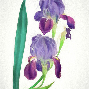 Digital Vintage Iris Botanical Florals Collection