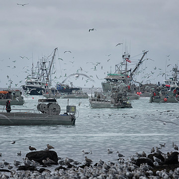 2018 Roe Herring Fishery Collection