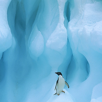 Antarctica by Colin Monteath Collection