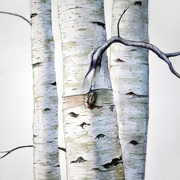 Birch Tree and Tree Painting Collection