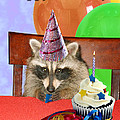 Birthday Greeting Cards Collection