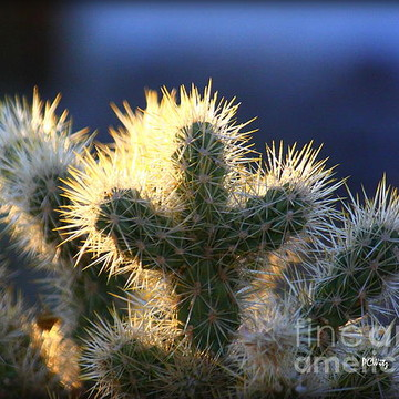 Cacti and Other Prickly Things