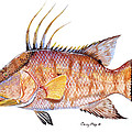 Carey Chen Artwork Collection: Fine Art Fish Studies