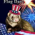 Flag Day Greeting Cards Collection
