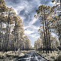 Florida Pines - Infrared Collection