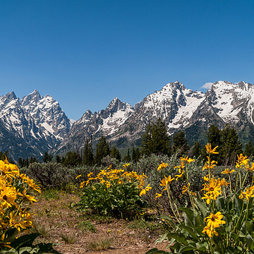 Grand Teton National Park Collection