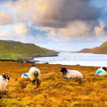 Landscapes of Ireland Collection