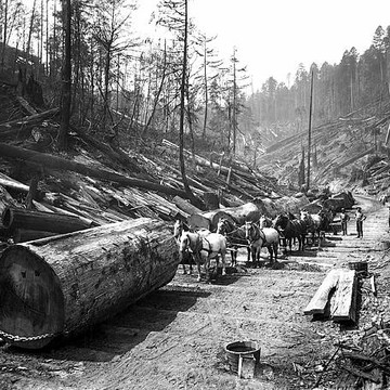 Logging & Timber Industry