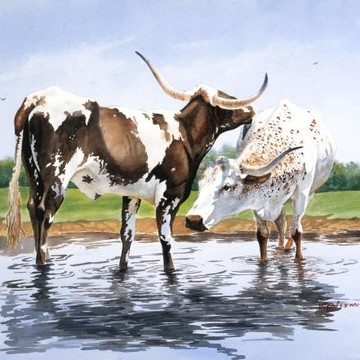 Longhorn Cattle Collection