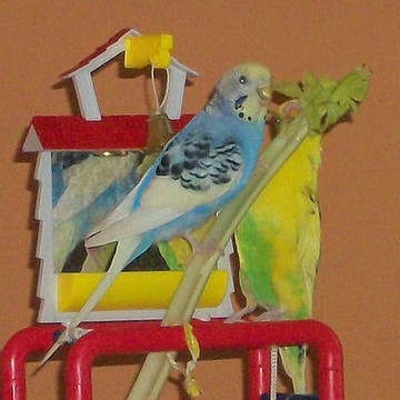Parakeets Collection
