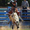 Rodeo in NC Collection
