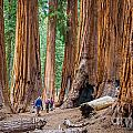 Sequoia National Park Collection