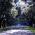 The Wormsloe Collection Collection