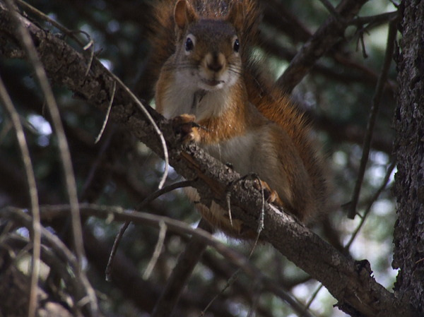 Wildlife Photograph -    Nuts    Is My Name by Dennis Wilkins