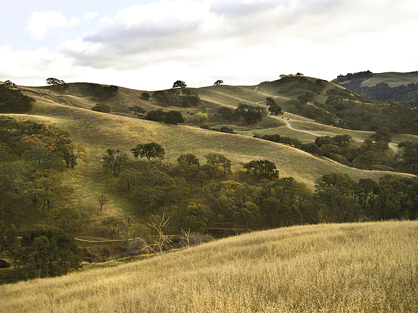 Landscape Photograph -  First Hill In Fall by Karen  W Meyer