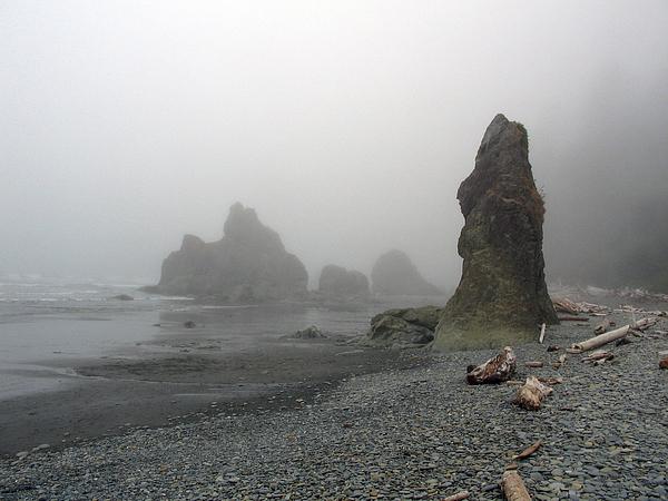 Landscape Photograph -  Pillar In Fog by Ty Nichols