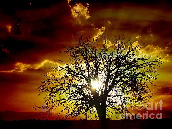 Tags Photograph -  Sunset Tree   by Vassilis Tagoudis