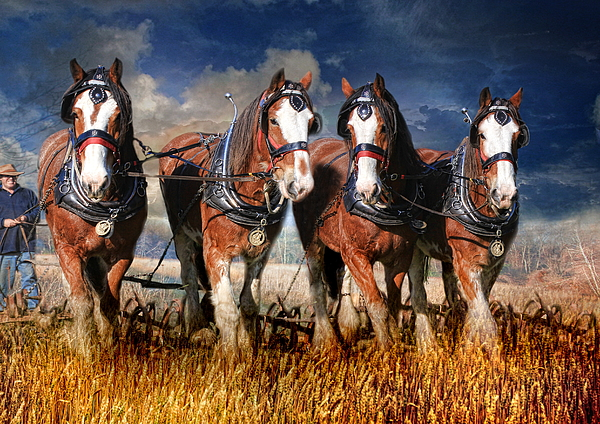 Heavy Horse Photograph -  The Team by Trudi Simmonds
