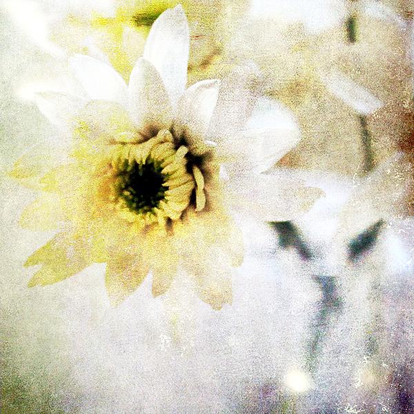 Flower Mixed Media -  White Flower by Linda Woods