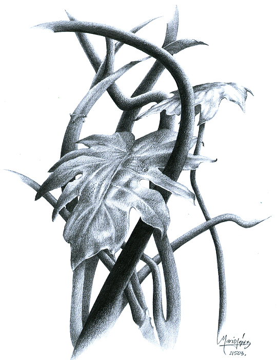Plant Drawing - 08 by Mario E Lopez