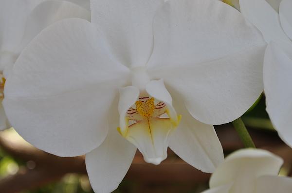 Flowers Photograph - 25 by Sfinga Sfinga