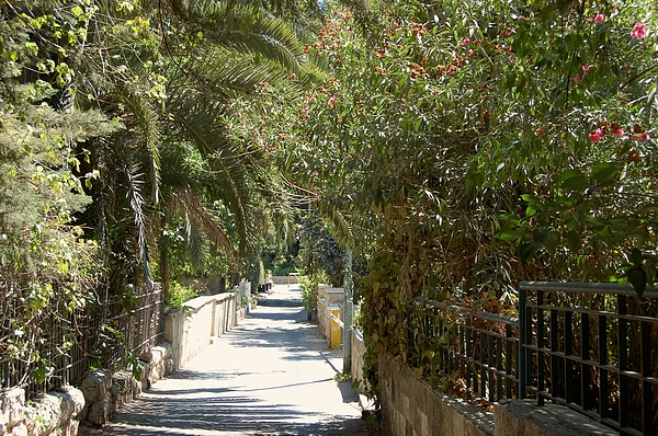 Israel Photograph - A Walk In Rehavia by Susan Heller