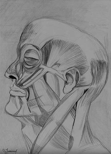 Anatomy - Facial Muscles Drawing by Vasilis Ioannou