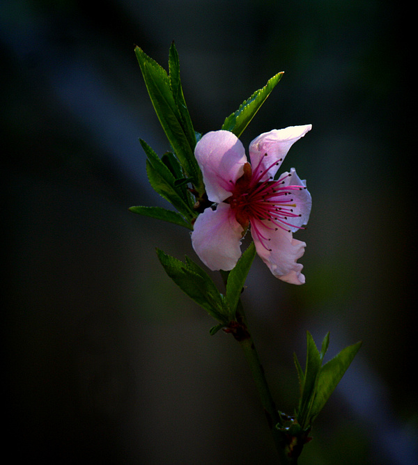 Blossom Photograph - Apple Blossom by Martin Morehead