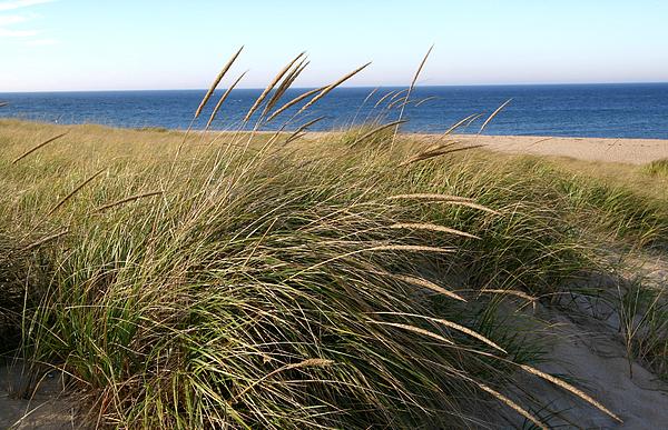 Beach Photograph - Beach Grass At Truro by Frank Russell
