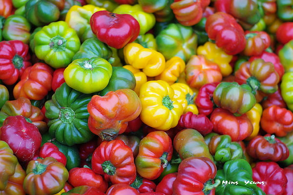 Bell Peppers Photograph - Beauty Contest by Ming Yeung