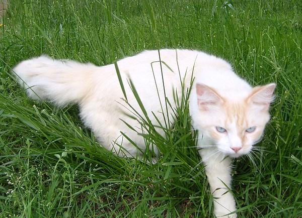 Cat Photograph - Bo The Cat by Mikki Simon