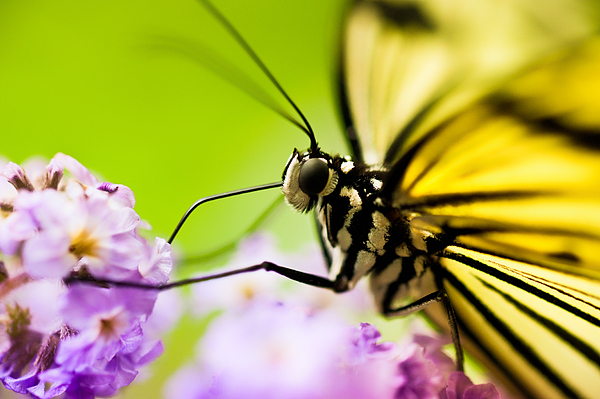 Butterfly Photograph - Butterfly by Sebastian Musial