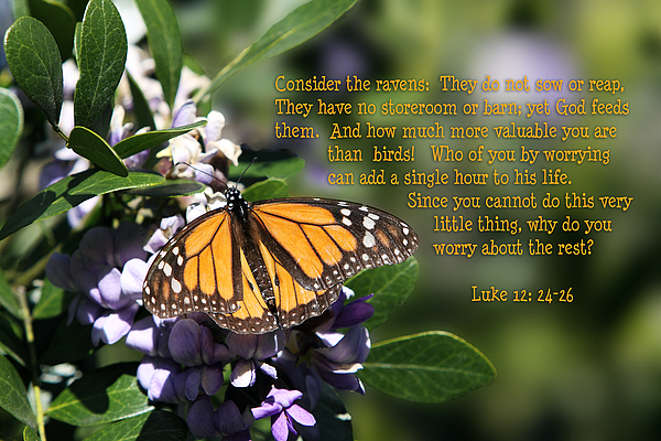 Scripture Photograph - Butterfly With Scripture by Linda Phelps