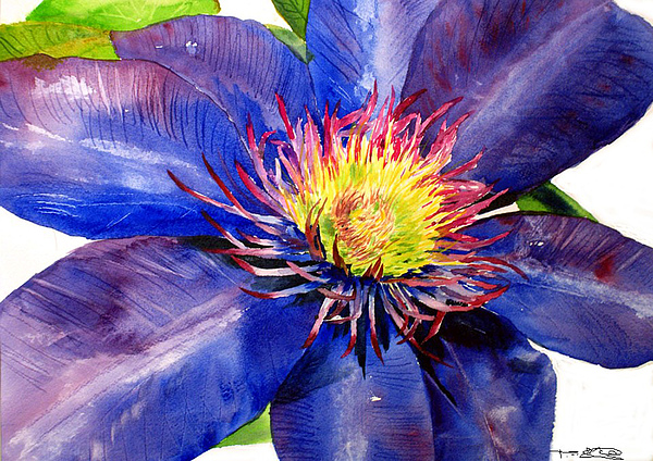 Flower Painting - Clematis by Tina Storey